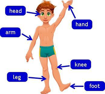 Картинка для дітей - частини тіла англійською мовою