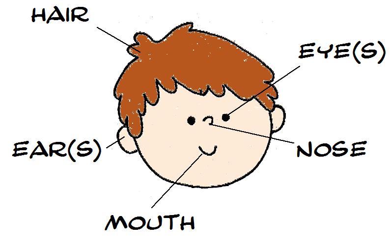 Картинка для дітей - частини обличчя англійською мовою (Parts of the Face)