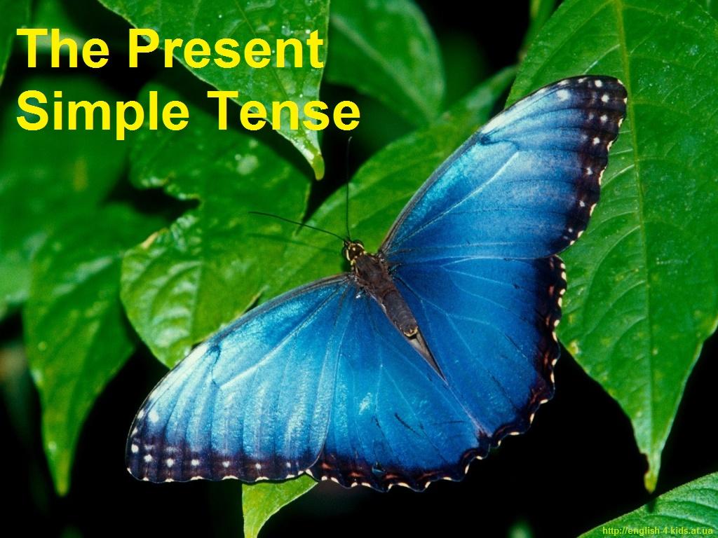 Теперішній простий час в англійській мові. The Present Indefinite (Simple) Tense
